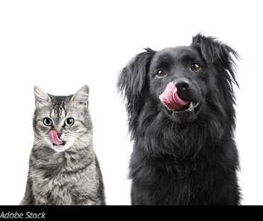 joyful-pets-adopt-dog-best-food