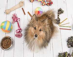 adopt a dog petconcerige