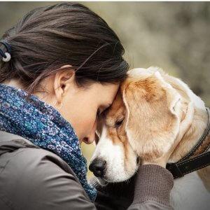 joyful-pets-goodbye-dog