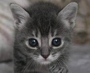 cute kitten for adopt