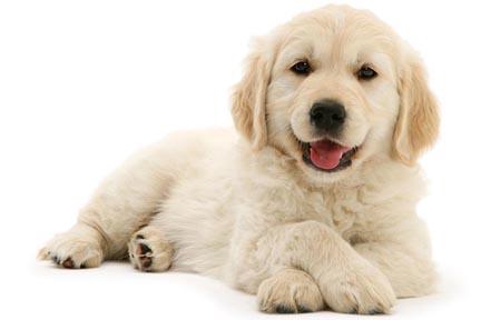 cute pup adot