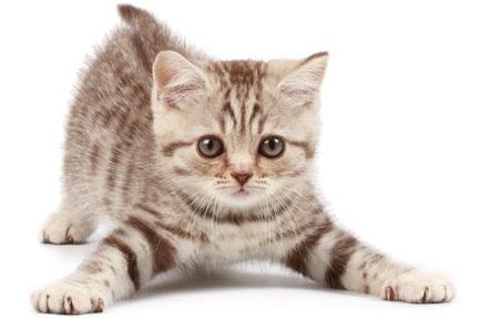 celebrate with kitten
